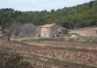 Vignoble près de Saint Cyr sur Mer
